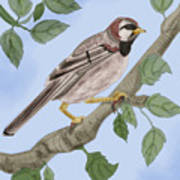 Common House Sparrow Poster
