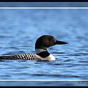 Common Loon, Framed Poster