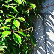 Concrete Green Poster