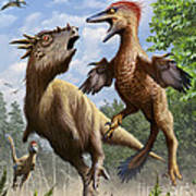 Confrontation Between Pectinodon Poster