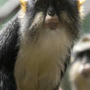 Congo Monkey2 Poster