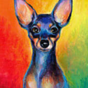 Contemporary Colorful Chihuahua Chiuaua Painting Poster