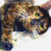Contented Cat Poster