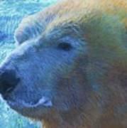 Cool Polar Bear Poster