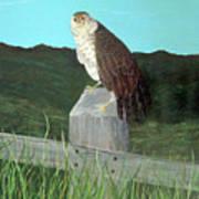 Copper Hawk Poster
