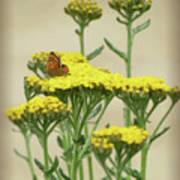 Copper On Yellow - Butterfly - Vignette 2 Poster