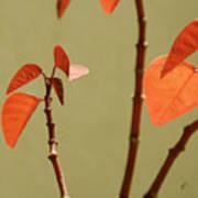 Copper Plant 2 Poster
