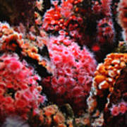 Coral Polyps Poster