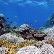 Corals Garden Poster