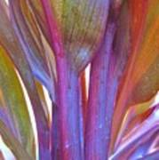 Cordyline Rainbow Leaves Poster