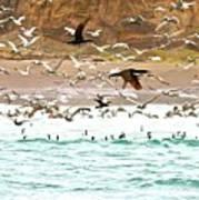 Cormorant Flight In Frenzy Poster