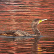 Cormorant On Autumn Red Poster