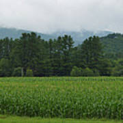 Corn Among The Mountains Poster