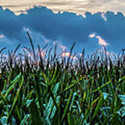 Corn And Clouds Panorama Poster