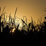 Corn Field Sunrise Poster