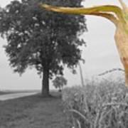 Corn Tree Poster