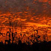 Corn Under A Fiery Sky Poster