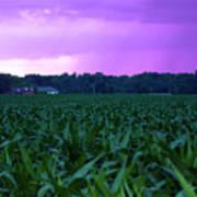 Cornfield Landscapes Purple Rain Poster