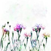 Cornflowers Watercolor  Poster