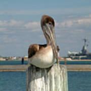 Corpus Christi Pelican Poster