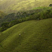 Costa Rica Pasture Poster