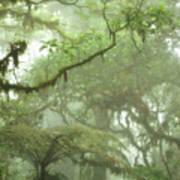 Costa Rican Cloud Forest Poster by Matt Tilghman