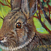 Cotton Tail Rabbit Poster