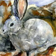 Cottontail In Camouflage Poster