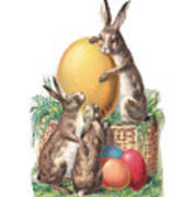 Cottontails And Eggs Poster