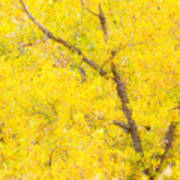 Cottonwood Colors  Poster