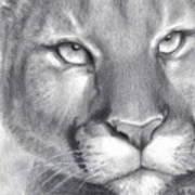 Cougar Spirit Poster