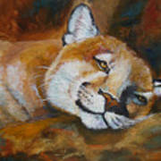 Cougar Wildlife Painting Poster