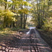 Country Lane In Autumn 2 Poster