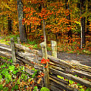 Country Road In Autumn Forest Poster
