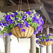 Courtyard Petunias Poster