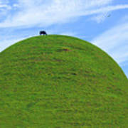 Cow Eating On Round Top Hill Poster