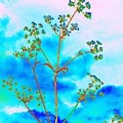 Cow Parsley Blossom 2 Poster