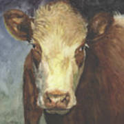 Cow Portrait II Poster