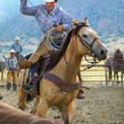 Cowboy Roping A Steer Poster