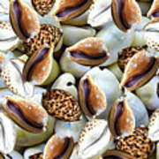 Cowrie Poster
