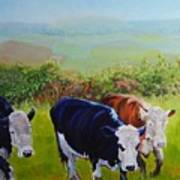 Cows And English Landscape Poster