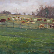 Cows In A Farm, Georgetown  Poster