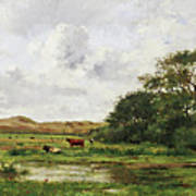 Cows In A Meadow Poster