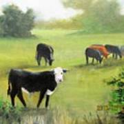 Cows In Pasture Poster