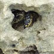 Crab Hiding In A Rock On The Seashore Poster