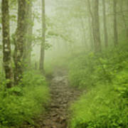Craggy Gardens Trail Poster