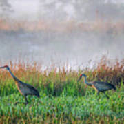 Cranes On Foggy Day Poster