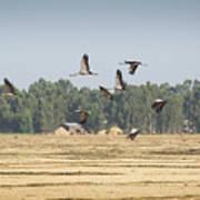 Cranes Over Ethiopia Poster