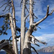 Crater Lake Tree Poster