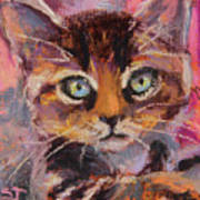Crazy Cat Tabby  Poster